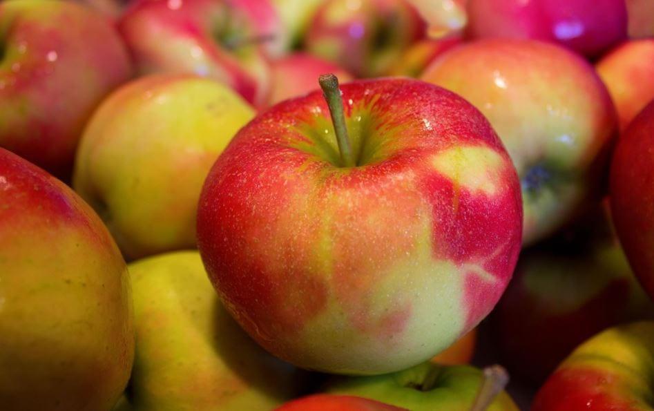alimentos de otoño sanis natura nutrición