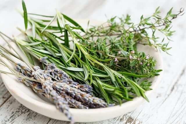 tomillo plantas medicinales para combatir el catarro tratamiento sintomático
